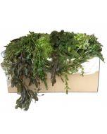 Zuurstofplanten pakket