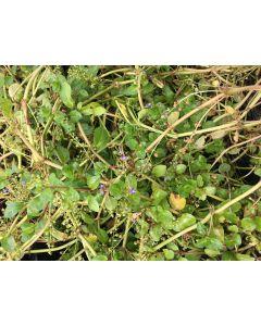 Wintergroen vijverpakket