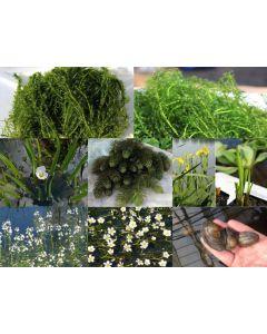 Anti-algen pakket 1