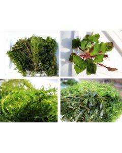 Vijverplanten pakket